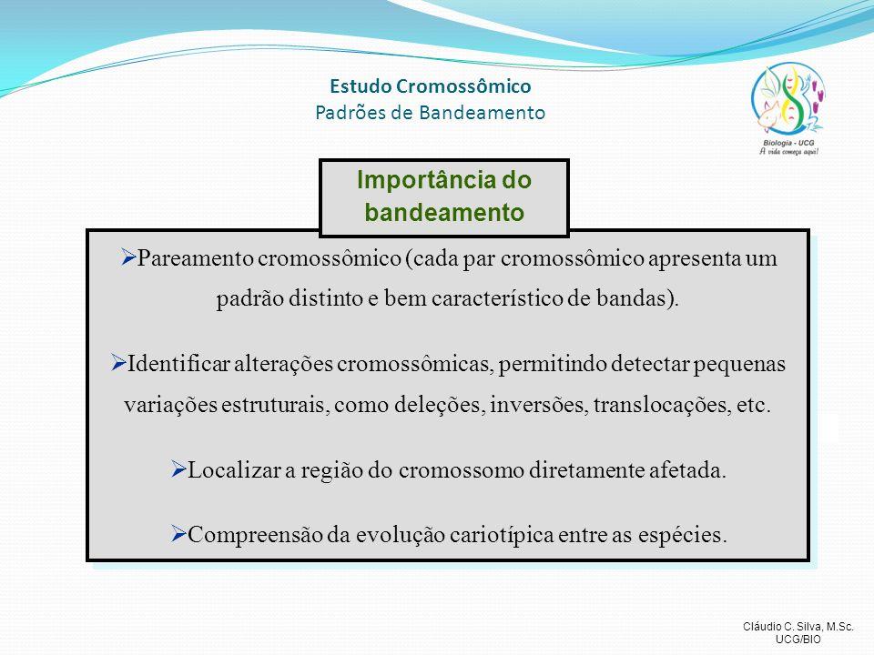 Cláudio C. Silva, M.Sc. UCG/BIO Estudo Cromossômico Padrões de Bandeamento Pareamento cromossômico (cada par cromossômico apresenta um padrão distinto