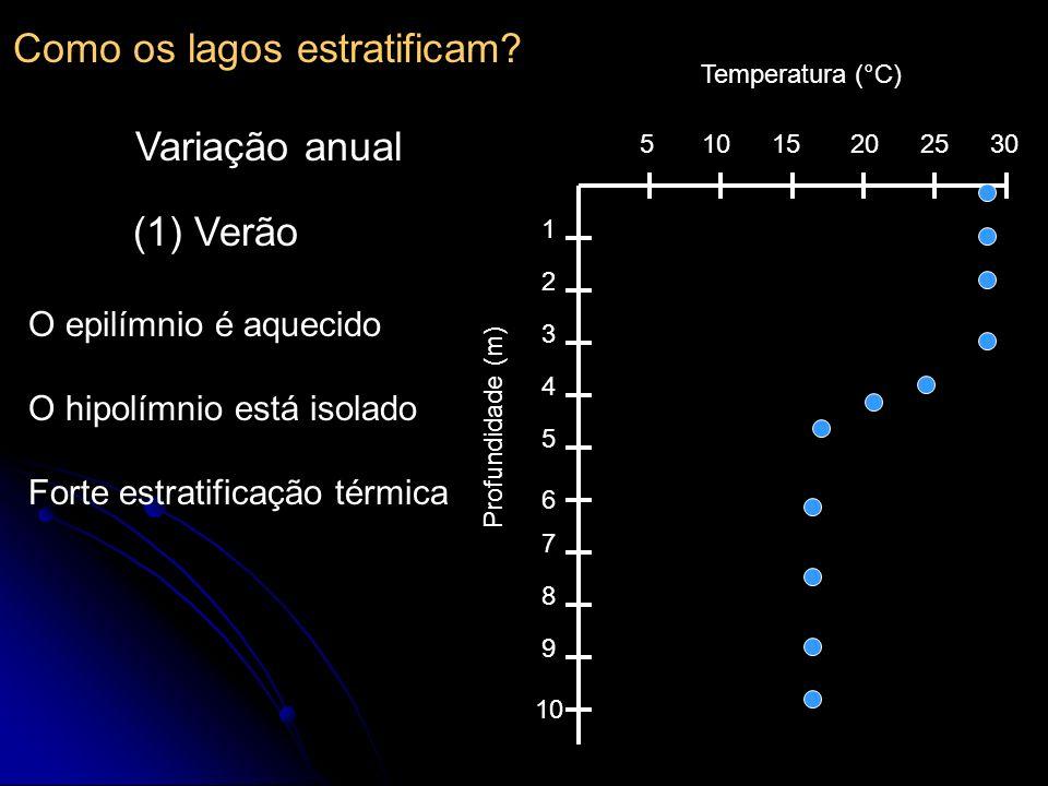 510152025 30 1 2 3 4 5 6 7 8 9 10 Temperatura (°C) Profundidade (m) (1) Verão O epilímnio é aquecido O hipolímnio está isolado Forte estratificação té