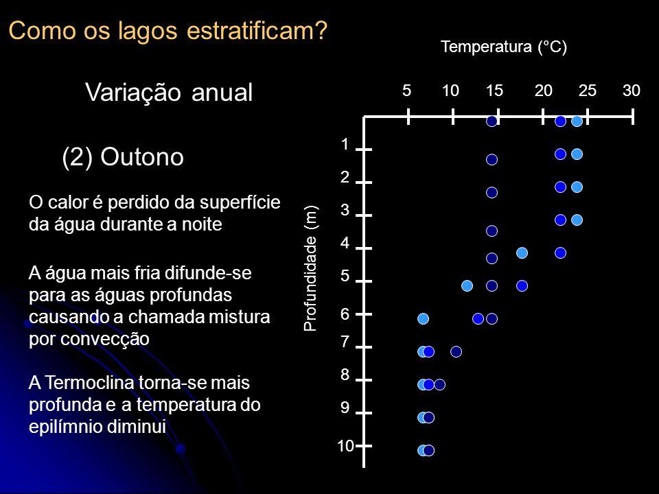 510152025 30 1 2 3 4 5 6 7 8 9 10 Temperatura (°C) Profundidade (m) (2) Outono A Termoclina torna-se mais profunda e a temperatura do epilímnio diminu