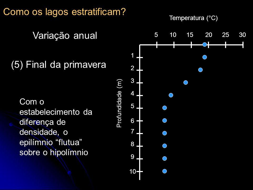 510152025 30 1 2 3 4 5 6 7 8 9 10 Temperatura (°C) Profundidade (m) (5) Final da primavera Com o estabelecimento da diferença de densidade, o epilímni
