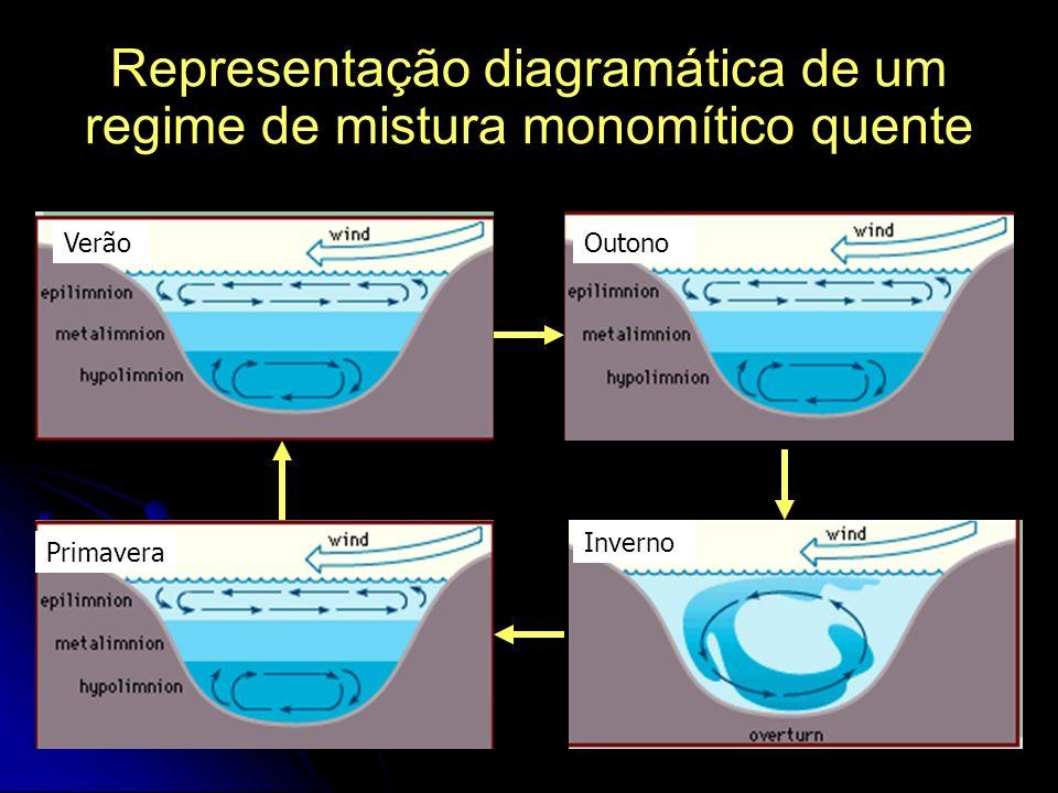 Representação diagramática de um regime de mistura monomítico quente Verão Outono Inverno Primavera