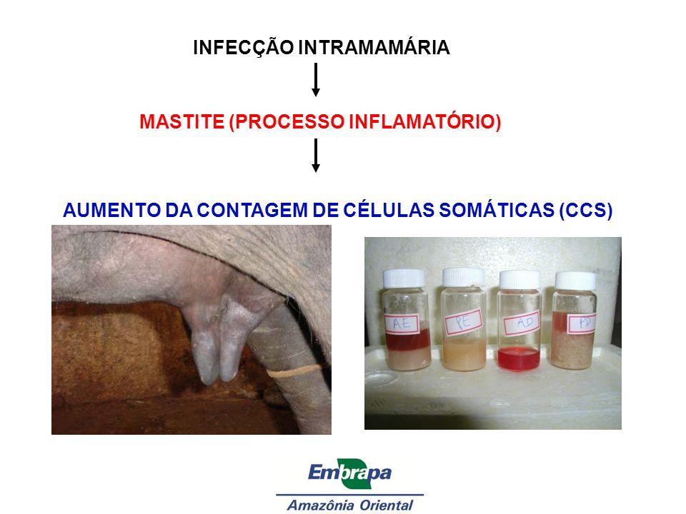 INFECÇÃO INTRAMAMÁRIA MASTITE (PROCESSO INFLAMATÓRIO) AUMENTO DA CONTAGEM DE CÉLULAS SOMÁTICAS (CCS)