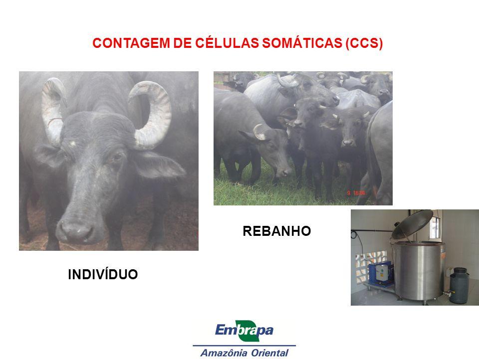 CONTAGEM DE CÉLULAS SOMÁTICAS (CCS) INDIVÍDUO REBANHO
