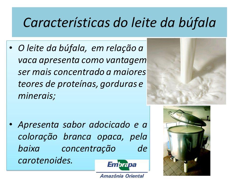 Características do leite da búfala O leite da búfala, em relação a vaca apresenta como vantagem ser mais concentrado a maiores teores de proteínas, go