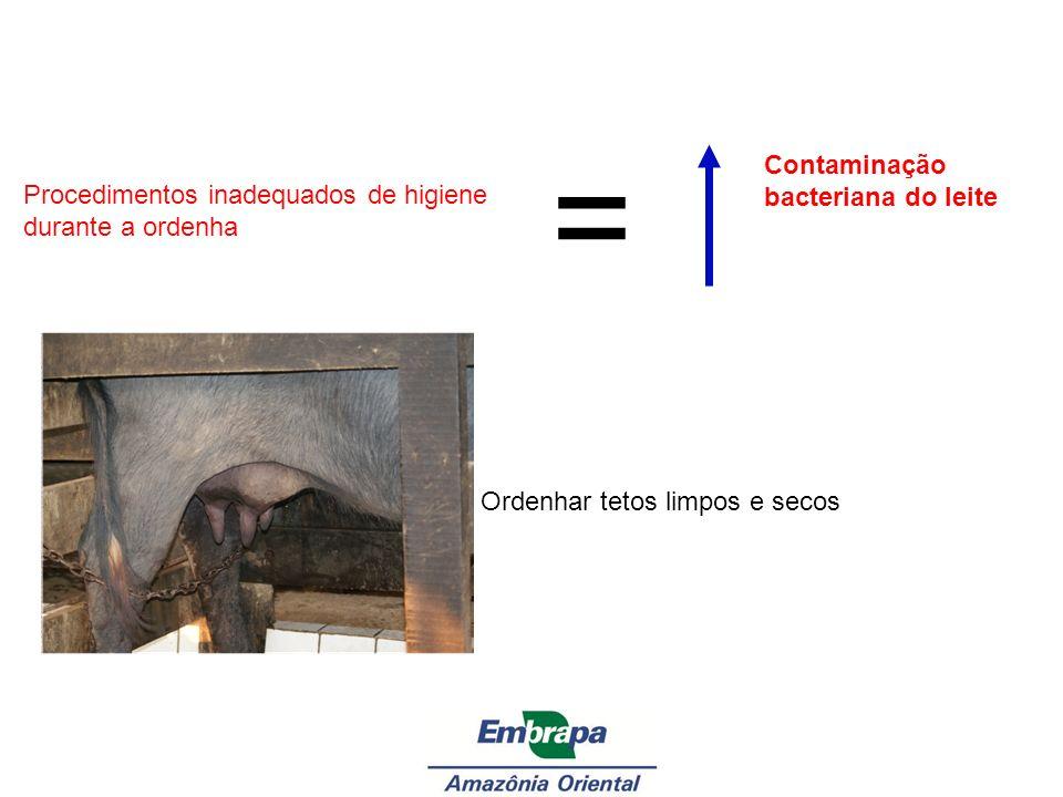 Procedimentos inadequados de higiene durante a ordenha = Contaminação bacteriana do leite Ordenhar tetos limpos e secos