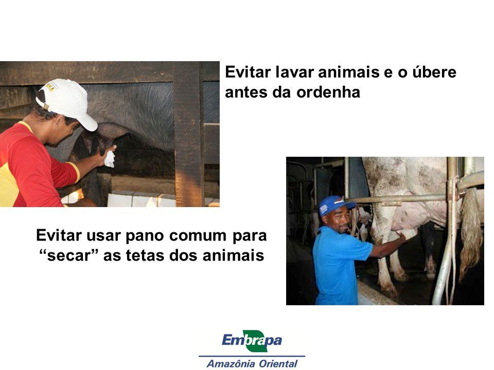 Evitar lavar animais e o úbere antes da ordenha Evitar usar pano comum para secar as tetas dos animais