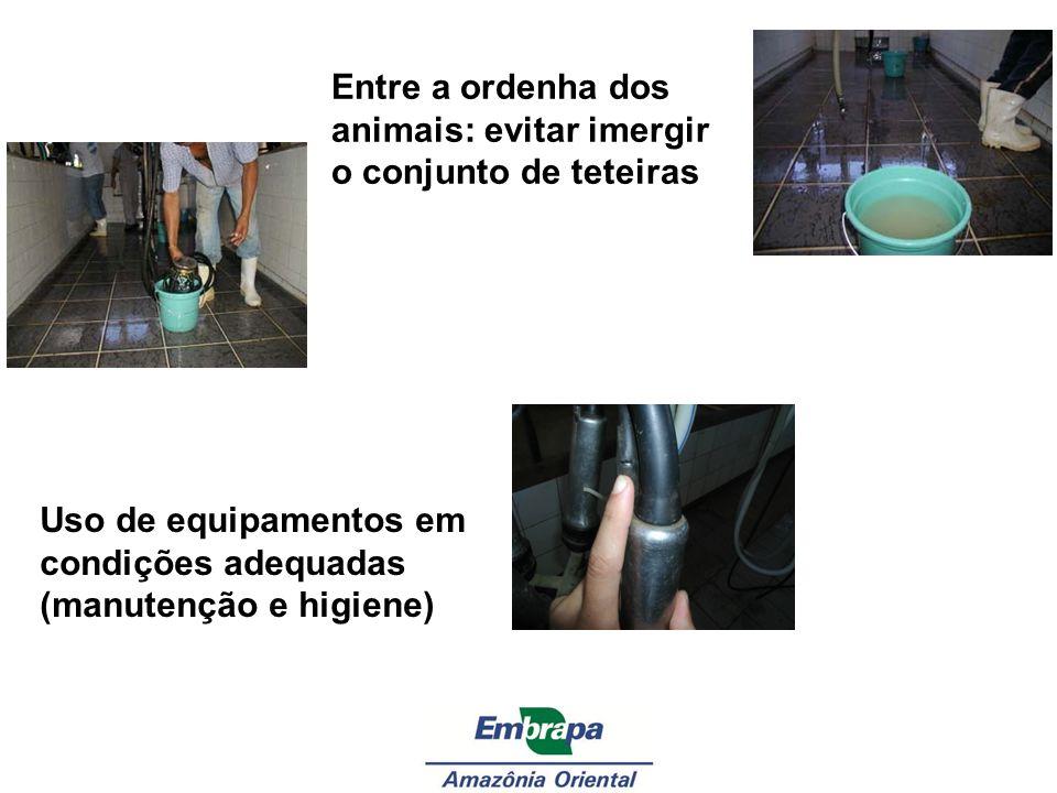 Entre a ordenha dos animais: evitar imergir o conjunto de teteiras Uso de equipamentos em condições adequadas (manutenção e higiene)