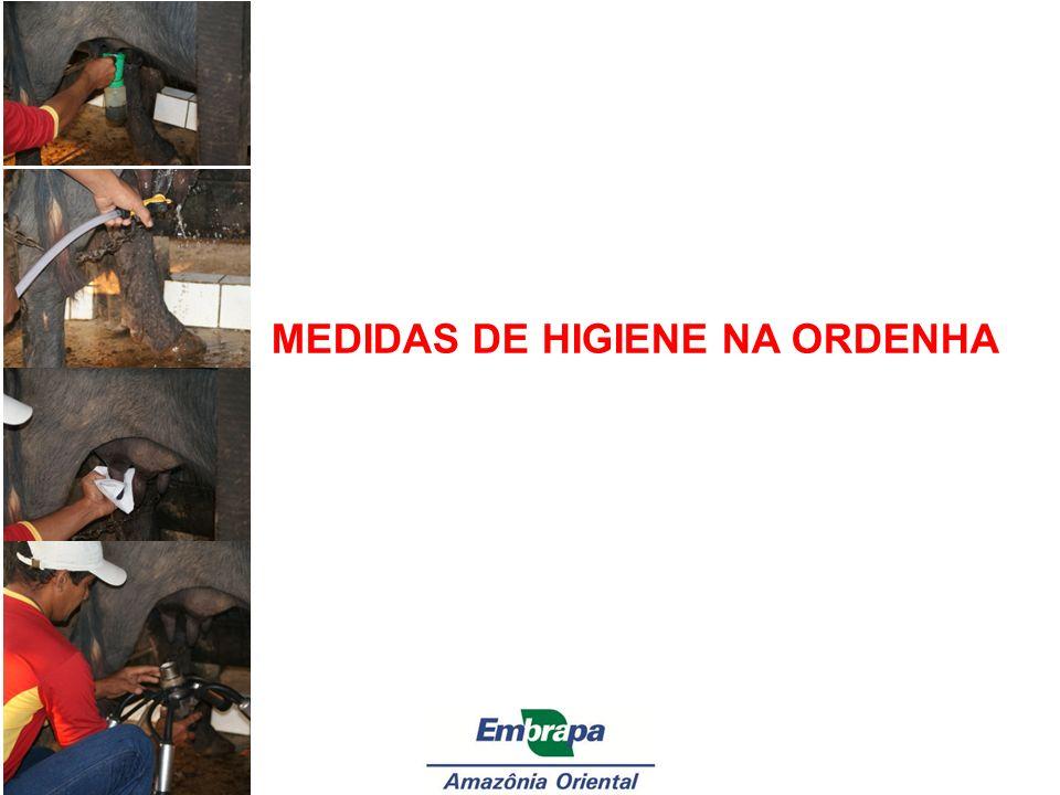 MEDIDAS DE HIGIENE NA ORDENHA