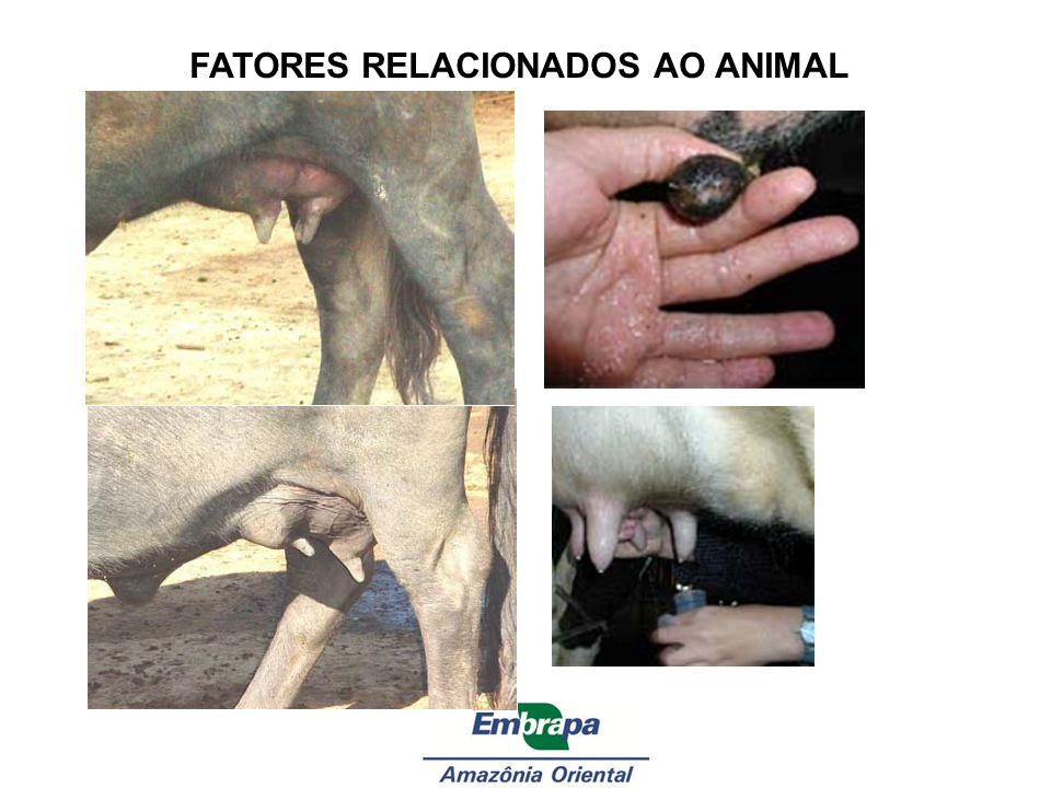 FATORES RELACIONADOS AO ANIMAL