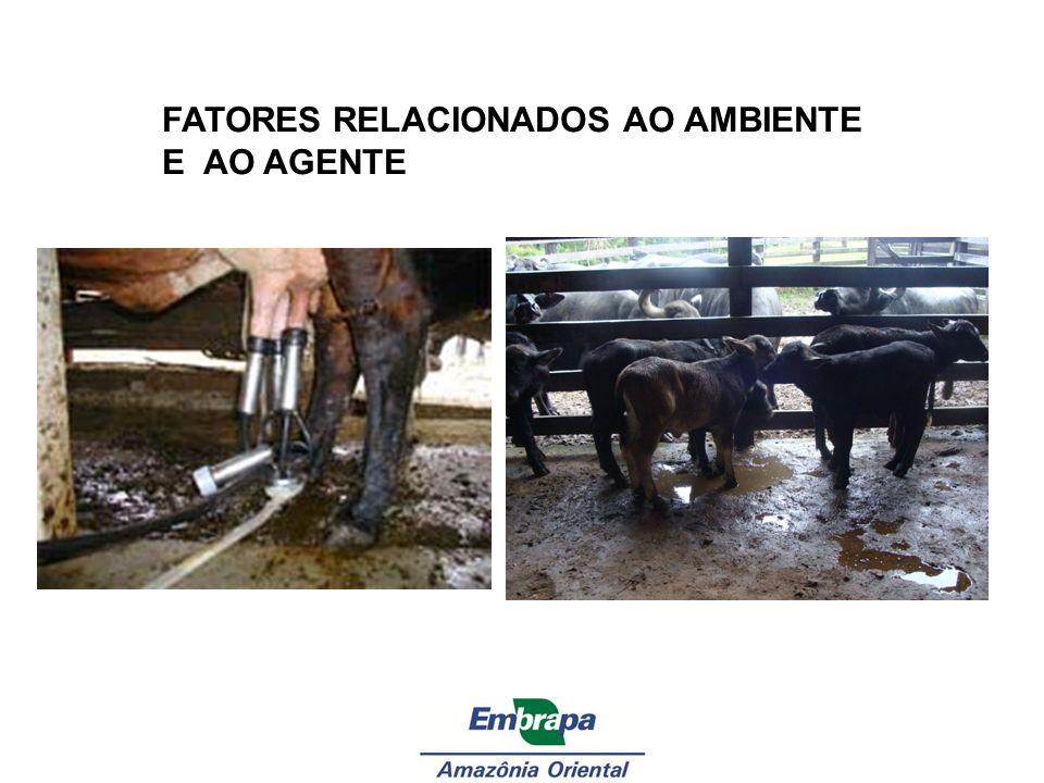 FATORES RELACIONADOS AO AMBIENTE E AO AGENTE