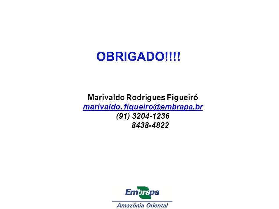 OBRIGADO!!!! Marivaldo Rodrigues Figueiró marivaldo. figueiro@embrapa.br (91) 3204-1236 8438-4822