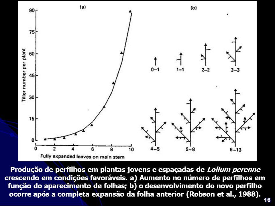 16 Produção de perfilhos em plantas jovens e espaçadas de Lolium perenne crescendo em condições favoráveis. a) Aumento no número de perfilhos em funçã