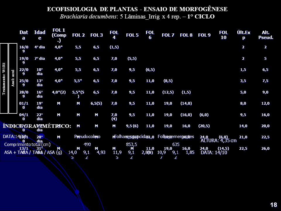 18 ECOFISIOLOGIA DE PLANTAS - ENSAIO DE MORFOGÊNESE Brachiaria decumbens: 5 Lâminas_Irrig x 4 rep. – 1° CICLO Dat a Idad e FOL 1 (Comp.) FOL 2 FOL 3 F