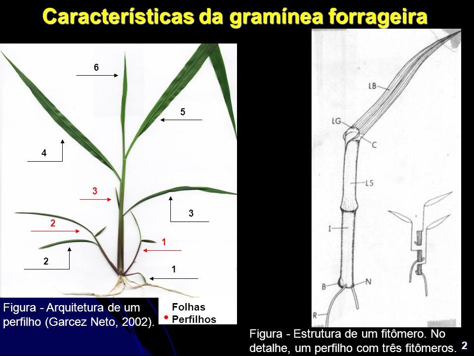 2 Características da gramínea forrageira 1 2 3 4 5 6 1 2 3 Folhas Perfilhos Figura - Arquitetura de um perfilho (Garcez Neto, 2002). Figura - Estrutur