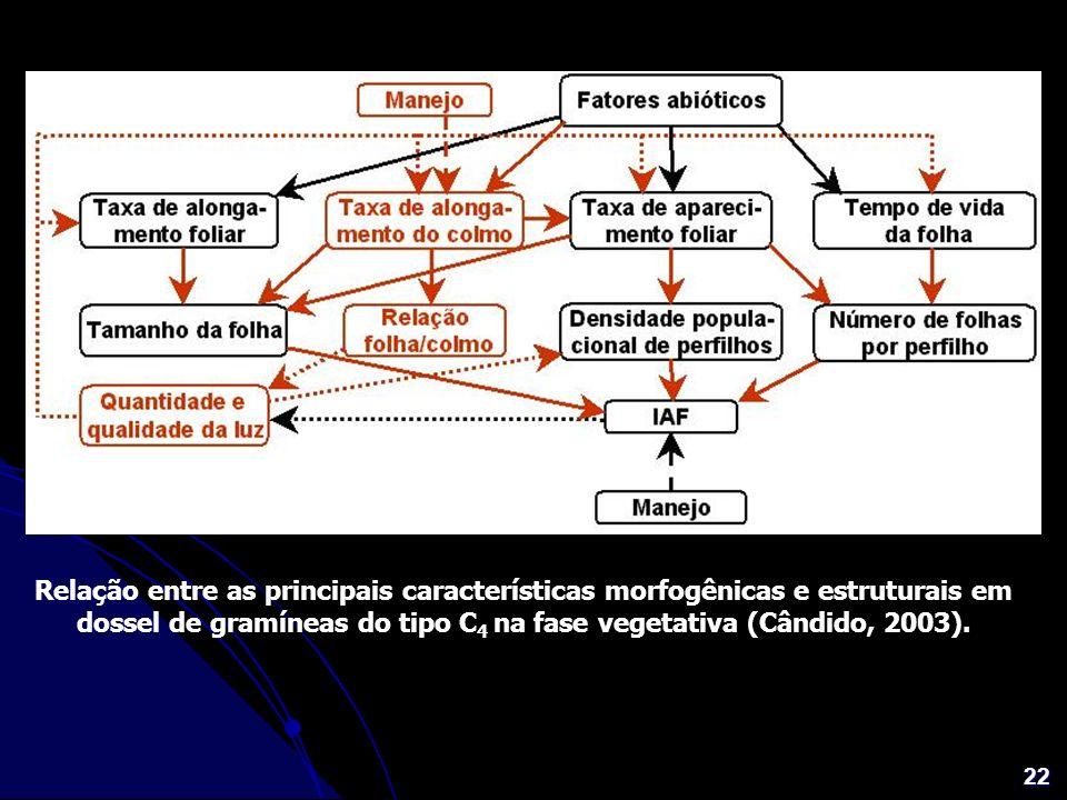 22 Relação entre as principais características morfogênicas e estruturais em dossel de gramíneas do tipo C 4 na fase vegetativa (Cândido, 2003).