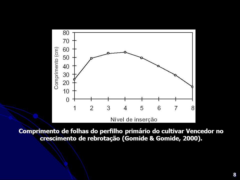 8 Comprimento de folhas do perfilho primário do cultivar Vencedor no crescimento de rebrotação (Gomide & Gomide, 2000).