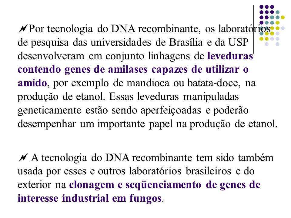 Por tecnologia do DNA recombinante, os laboratórios de pesquisa das universidades de Brasília e da USP desenvolveram em conjunto linhagens de levedura