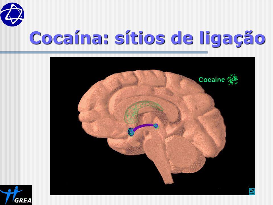 Cocaína: sítios de ligação