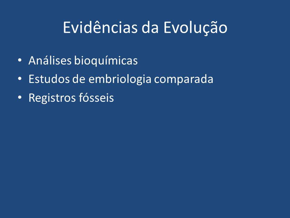 Evidências da Evolução Análises bioquímicas Estudos de embriologia comparada Registros fósseis