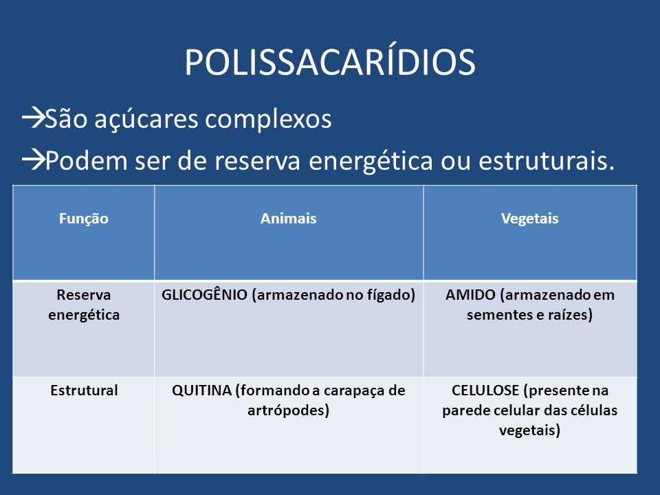 POLISSACARÍDIOS São açúcares complexos Podem ser de reserva energética ou estruturais. FunçãoAnimaisVegetais Reserva energética GLICOGÊNIO (armazenado