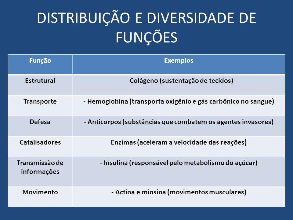 DISTRIBUIÇÃO E DIVERSIDADE DE FUNÇÕES FunçãoExemplos Estrutural - Colágeno (sustentação de tecidos) Transporte- Hemoglobina (transporta oxigênio e gás