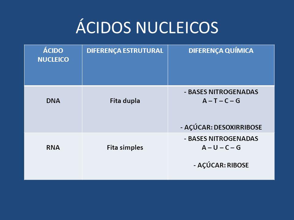 ÁCIDOS NUCLEICOS ÁCIDO NUCLEICO DIFERENÇA ESTRUTURALDIFERENÇA QUÍMICA DNAFita dupla - BASES NITROGENADAS A – T – C – G - AÇÚCAR: DESOXIRRIBOSE RNAFita