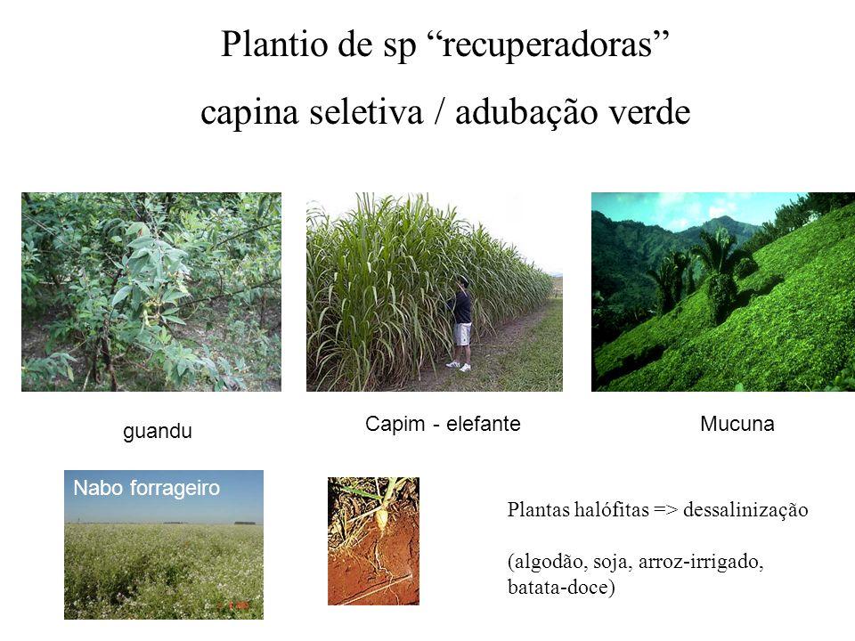 Plantio de sp recuperadoras capina seletiva / adubação verde guandu Capim - elefanteMucuna Nabo forrageiro Plantas halófitas => dessalinização (algodã
