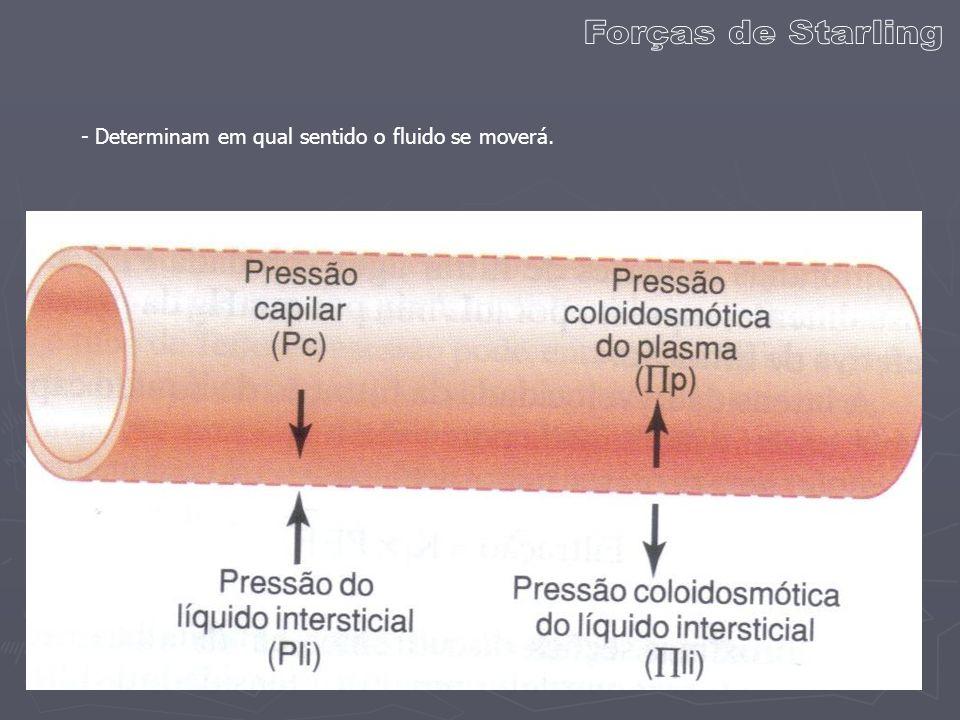 - Somente 1/10 do líquido filtrado não é reabsorvido pelo capilar sanguíneo.