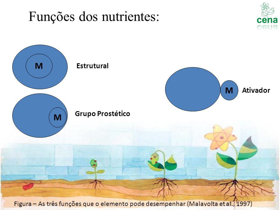 Funções dos nutrientes: M Estrutural M Grupo Prostético M Ativador Figura – As três funções que o elemento pode desempenhar (Malavolta et al., 1997)