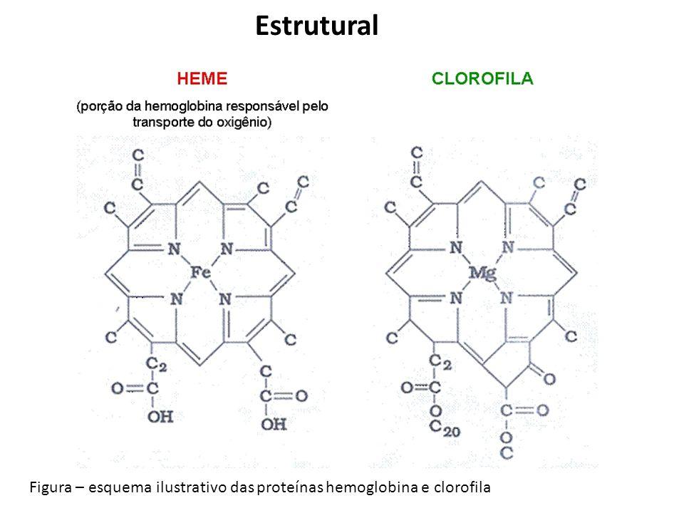 Estrutural Figura – esquema ilustrativo das proteínas hemoglobina e clorofila