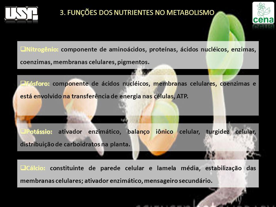 Nitrogênio: Nitrogênio: componente de aminoácidos, proteínas, ácidos nucléicos, enzimas, coenzimas, membranas celulares, pigmentos. Fósforo: Fósforo: