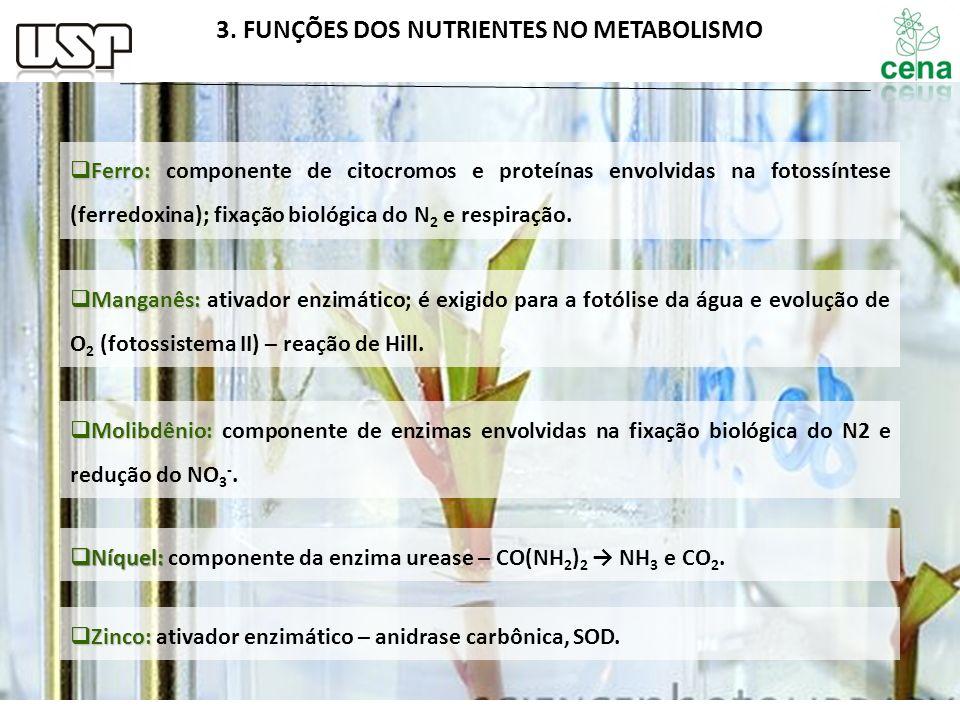Ferro: Ferro: componente de citocromos e proteínas envolvidas na fotossíntese (ferredoxina); fixação biológica do N 2 e respiração. Manganês: Manganês
