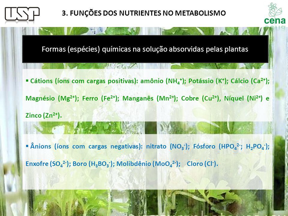 Formas (espécies) químicas na solução absorvidas pelas plantas Cátions (íons com cargas positivas): amônio (NH 4 + ); Potássio (K + ); Cálcio (Ca 2+ )