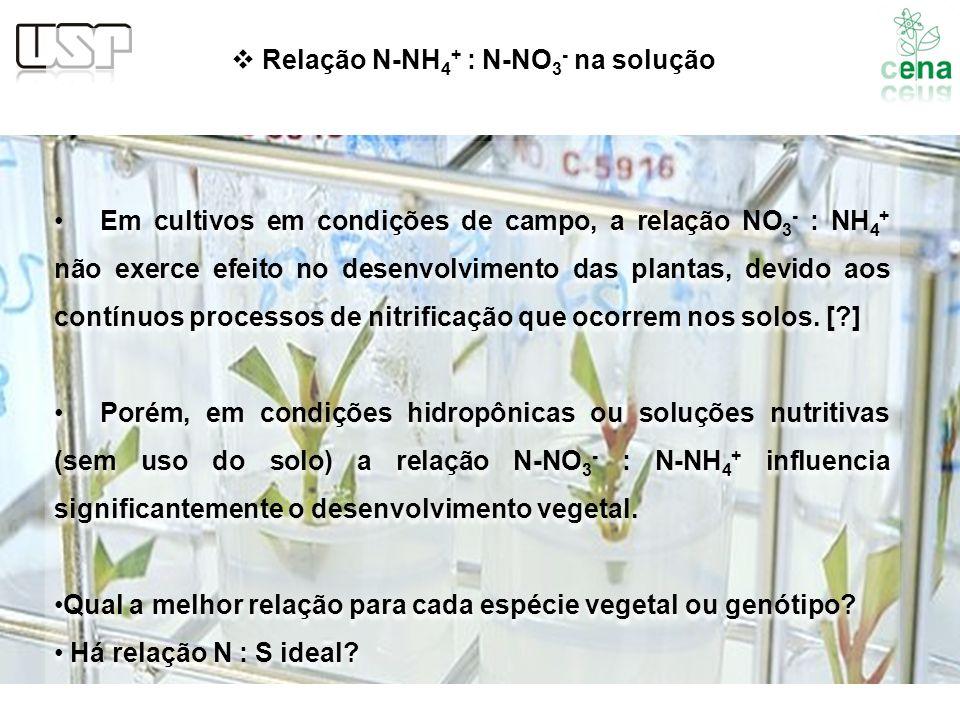 Em cultivos em condições de campo, a relação NO 3 - : NH 4 + não exerce efeito no desenvolvimento das plantas, devido aos contínuos processos de nitri