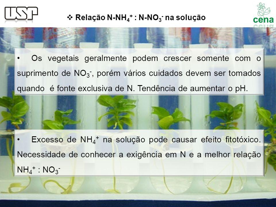 Os vegetais geralmente podem crescer somente com o suprimento de NO 3 -, porém vários cuidados devem ser tomados quando é fonte exclusiva de N. Tendên