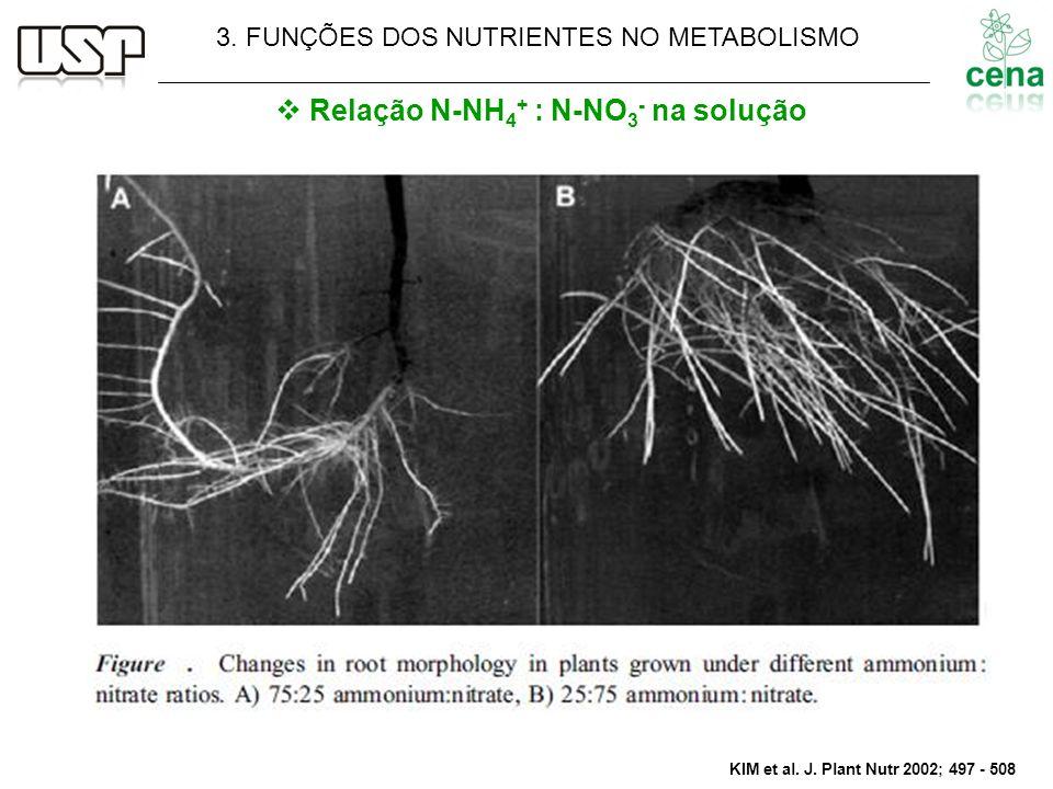 KIM et al. J. Plant Nutr 2002; 497 - 508 Relação N-NH 4 + : N-NO 3 - na solução 3. FUNÇÕES DOS NUTRIENTES NO METABOLISMO