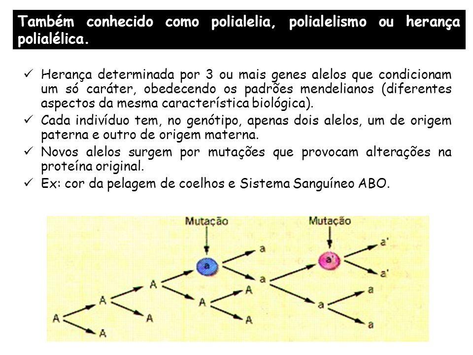 ALELOS MÚLTIPLOS : Um exemplo Cor da pelagem Em coelhos A= Chincila B= Aguti C= himalaia D= albina