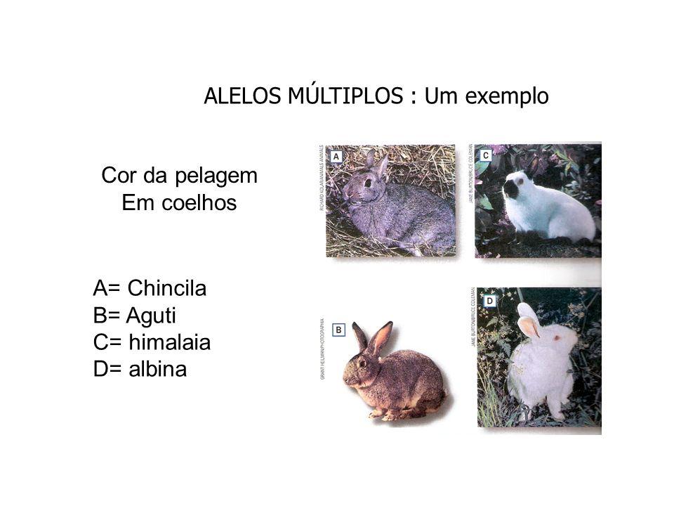 Cor da pelagem em coelhos (4 alelos) - C selvagem (aguti).