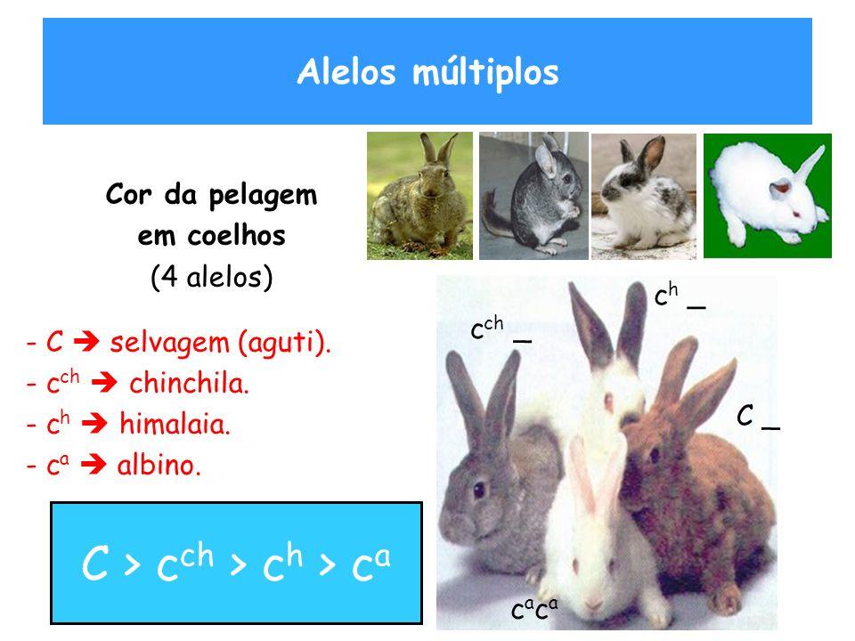 ALELOS MÚLTIPLOS : Um exemplo Cor da pelagem Em coelhos FenótipoGenótipos AgutiCC, Cc ch, Cc h, Cc a Chinchilac ch c ch, c ch c h, c ch c a Himalaiac h c h, c h c a albinacacacaca Existe uma hierarquia de dominância entre os alelos