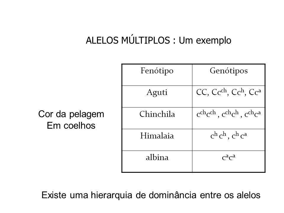 EXERCÍCIO 1 Qual é a prole de um coelho selvagem heterozigoto para himalaia com uma fêmea chinchila heterozigota para albina.