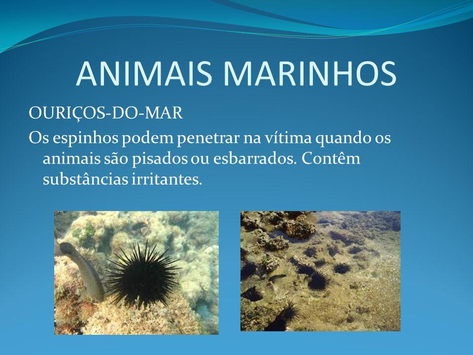 ANIMAIS MARINHOS OURIÇOS-DO-MAR Os espinhos podem penetrar na vítima quando os animais são pisados ou esbarrados. Contêm substâncias irritantes.
