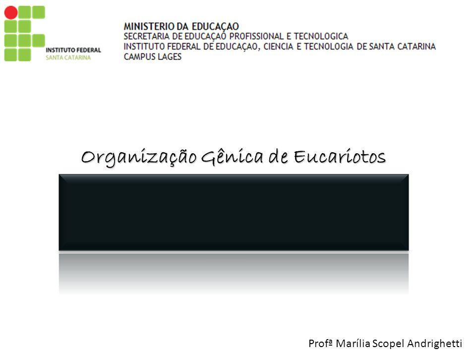 Organização Gênica de Eucariotos Profª Marília Scopel Andrighetti