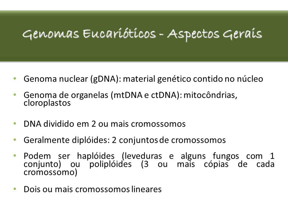 Genomas Eucarióticos - Aspectos Gerais Genoma nuclear (gDNA): material genético contido no núcleo Genoma de organelas (mtDNA e ctDNA): mitocôndrias, c