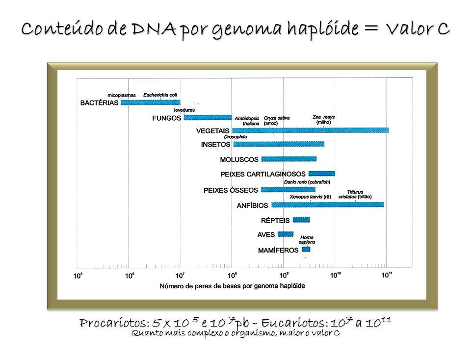 Conteúdo de DNA por genoma haplóide = Valor C Procariotos: 5 x 10 5 e 10 7 pb - Eucariotos: 10 7 a 10 11 Quanto mais complexo o organismo, maior o val