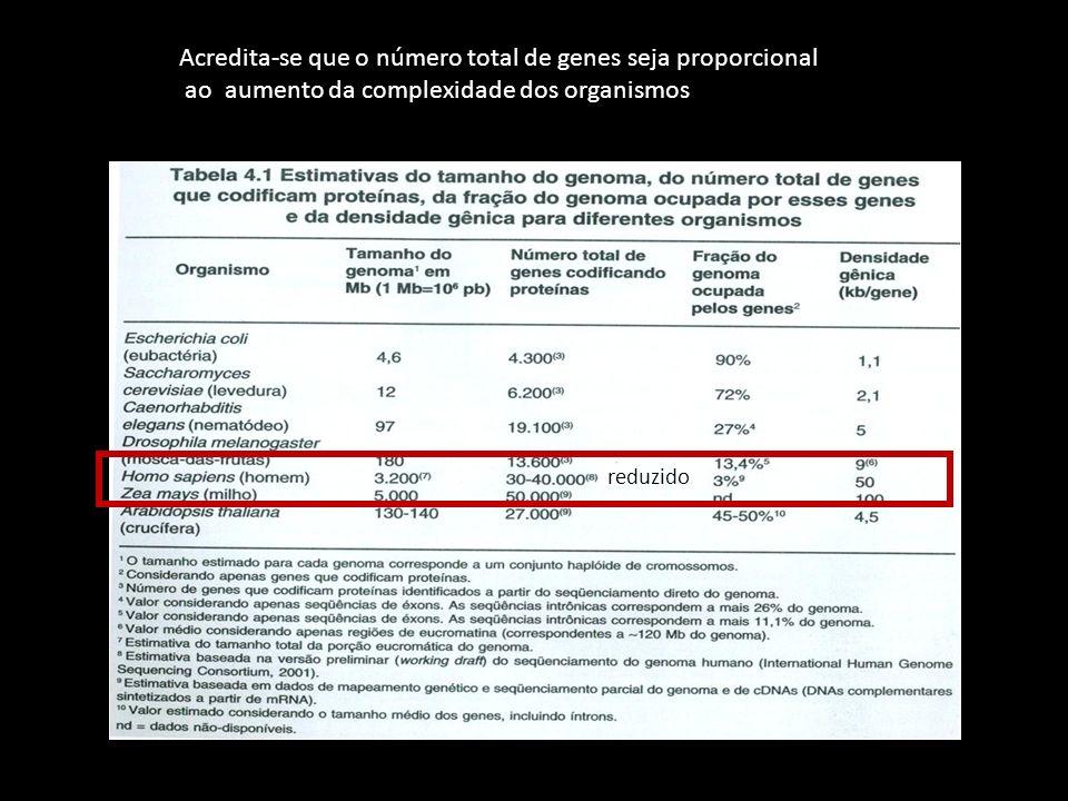 reduzido Acredita-se que o número total de genes seja proporcional ao aumento da complexidade dos organismos