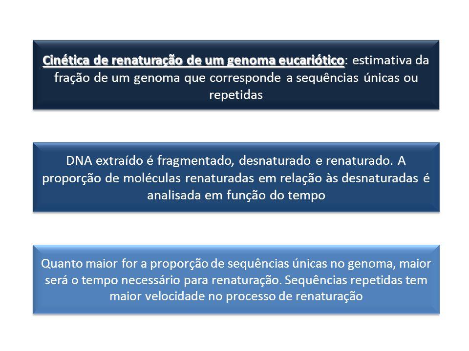 Cinética de renaturação de um genoma eucariótico Cinética de renaturação de um genoma eucariótico: estimativa da fração de um genoma que corresponde a