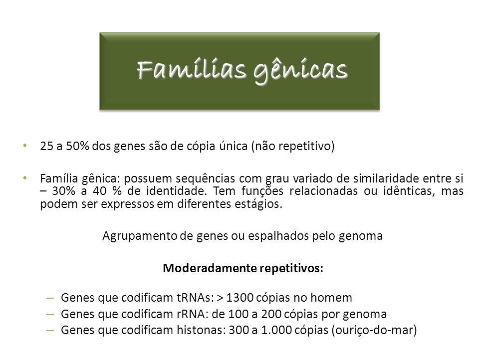 Famílias gênicas 25 a 50% dos genes são de cópia única (não repetitivo) Família gênica: possuem sequências com grau variado de similaridade entre si –