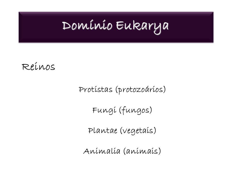 Domínio Eukarya Reinos Protistas (protozoários) Fungi (fungos) Plantae (vegetais) Animalia (animais)