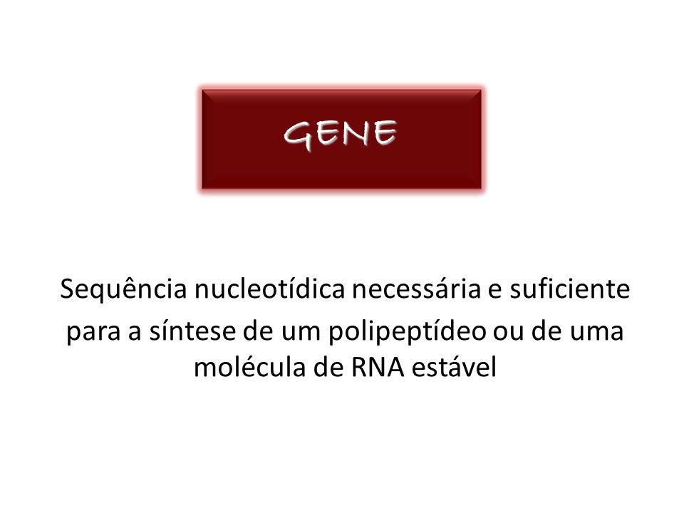 GENE Sequência nucleotídica necessária e suficiente para a síntese de um polipeptídeo ou de uma molécula de RNA estável