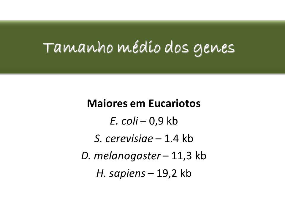Tamanho médio dos genes Maiores em Eucariotos E. coli – 0,9 kb S. cerevisiae – 1.4 kb D. melanogaster – 11,3 kb H. sapiens – 19,2 kb
